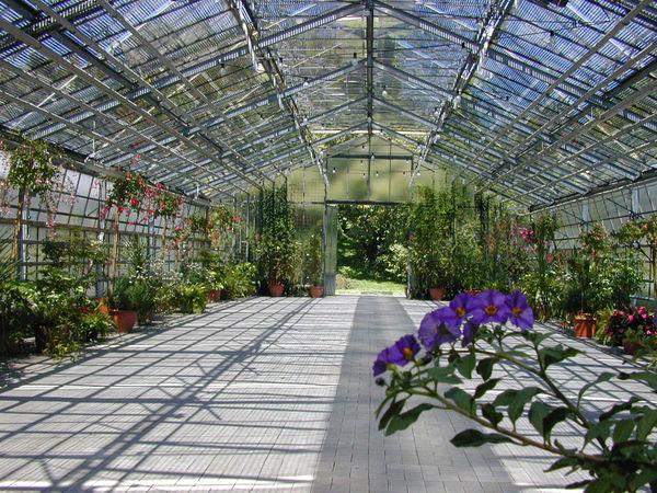 Le jardin botanique de l 39 universit de b le basel - Residence les jardins de l universite ...