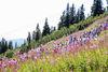 Arber Bergkirchweih: Die Besucher strömen zum Gipfel des Arbers