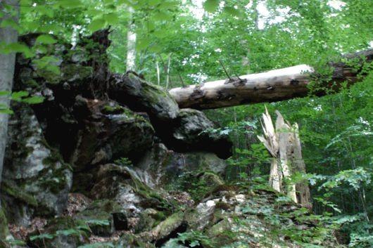 Totholz in der Johannisruh am Urwaldsteig bei Bayerisch Eisenstein