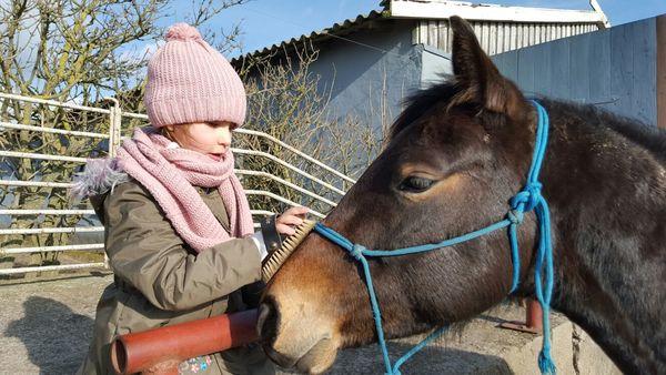 Coaching mit Pferden auf dem Landhof Septemberwiese bei Beeskow, Foto: Jörn Berger
