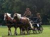 Fahrsport, Foto: Pferdebetrieb Zehe