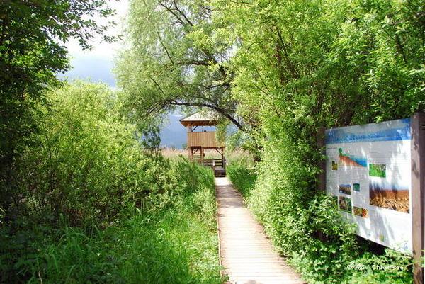 Der Weg zum Beobachtungsturm über einen hölzernen Steg.