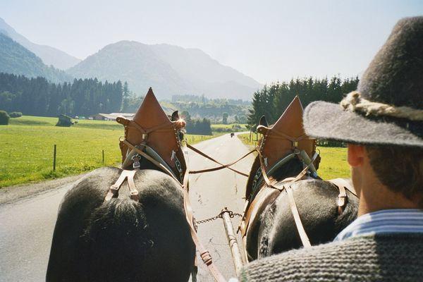 Kutschenfahrt mit Bergblick