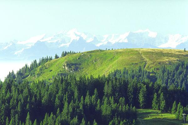 Bernau im Schwarzwald: Blick vom Feldberg auf die karge Kuppe des Herzogehorns - dahinter der Blick auf die 140 Kilometer entfernten Alpen.