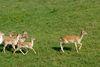 Rehe im Wildpark Buchet bei Bernried im Naturpark Bayerischer Wald