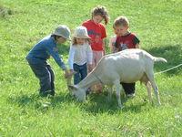 Neben Weinbergschnecken, Schafen, Hühnern und Gänsen hat das Museum auch Ziegen zu bieten