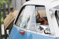 Mehr als 1000 Fahrzeuge sind beim großen Oldtimertreffen im Sommer zu Gast