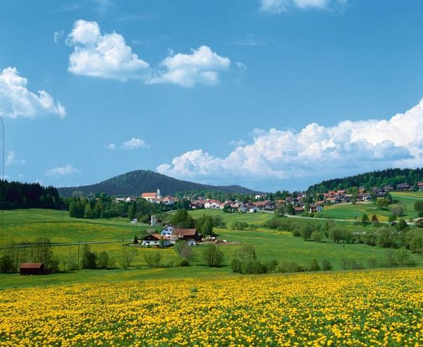 Bischofsmais liegt in einer ausgedehnten grünen Landschaft, zwischen Tausendern, ursprünglichen Wäldern und munter dahin plätschernden Bächen - kurz: mitten im Bayerischen Wald.