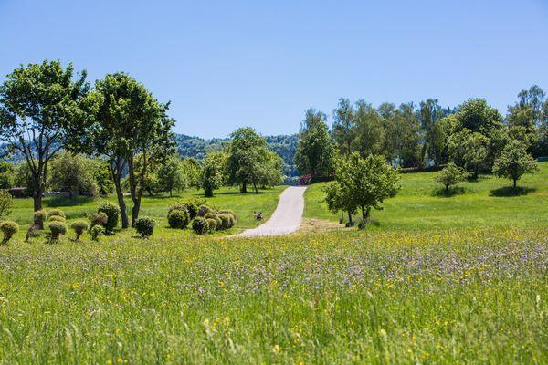 Landschaft bei Bisingen