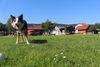 Hunde erlaubt bei Camping aqua hema