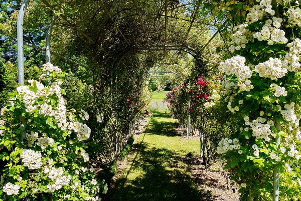 Rosenlaube im Pirminiusgarten, Blieskastel