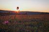 Bliesgau bei Sonnenaufgang