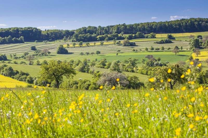 Frühling in den Streuobstwiesen, Biosphaerenreservat Bliesgau