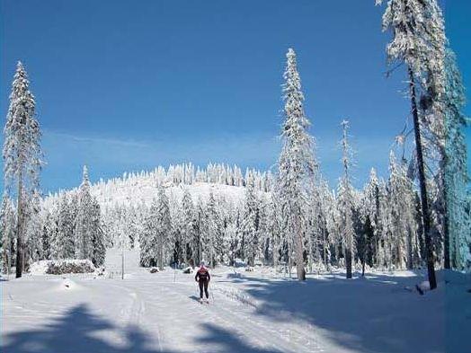 Skilangläufer genießen traumhafte Aussichtspunkte im Aktivzentrum Bodenmais