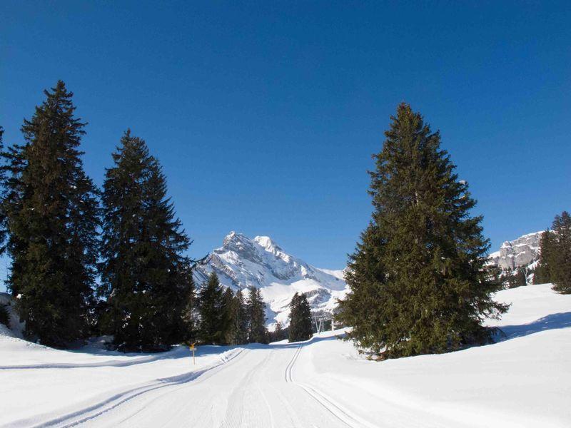Panorama Langlaufloipe Braunwald