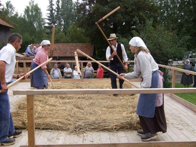 Drischeldreschen beim traditionellen Drescherfest in Breitenberg