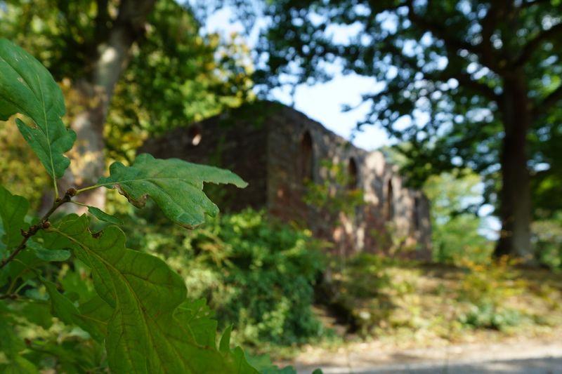 Schaulich thront die Centgrafenkapelle auf dem Eichenbuckel