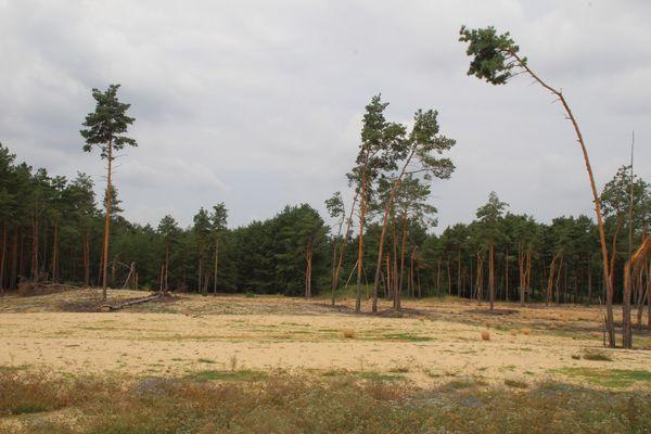 Auf dem Wanderweg, Foto: Seenland Oder-Spree