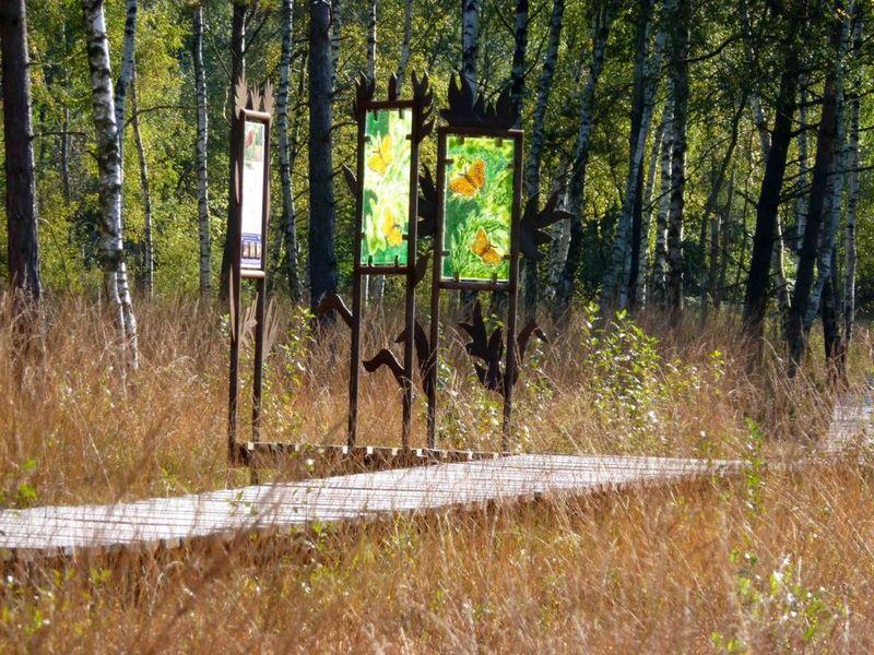 Gläserne Infotafeln am Lehrpfad durch das Arracher Moor
