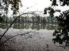 Weiher im Naturschutzgebiet Rötelseeweihergebiet bei Cham