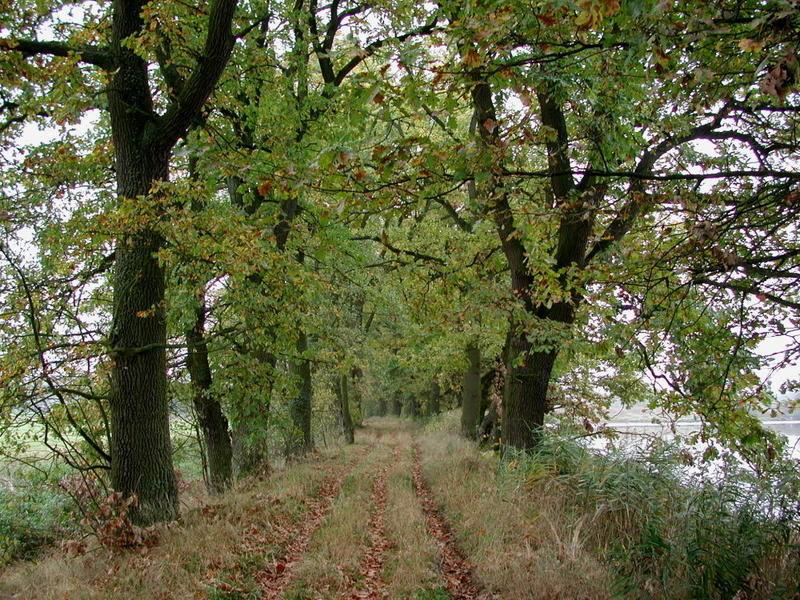 Baumallee im Naturschutzgebiet Rötelseeweihergebiet bei Cham