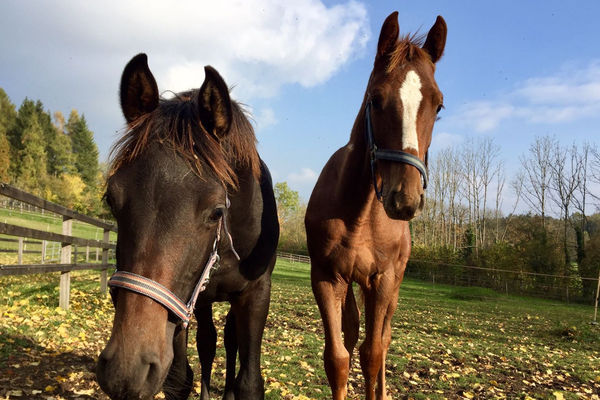 Pferde in der Reitschule Gut Ising