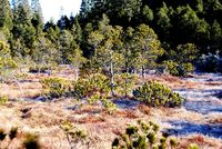 Blick in Horbacher Moor