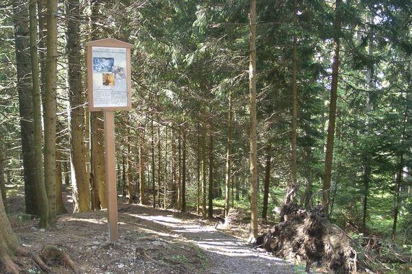 Bergbaupfad bei Dachsberg-Rüttewies