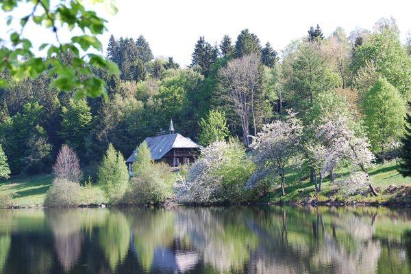 Frühling am Klosterweiher mit Kirschblüte