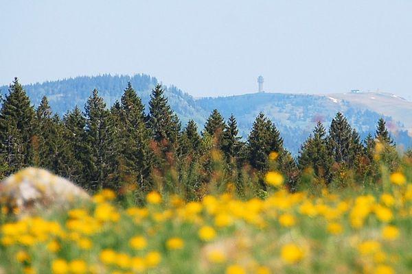 Blick zum Feldberg vom Naturlehrpfad aus