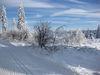 Wintermärchen auf der Höhenloipe in Richtung Hochmoor im Langlaufgebiet Rusel-Oberbreitenau