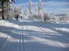 Langlauf-Erlebnis auf der Höhenloipe beim Landshuter Haus