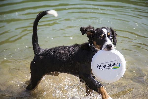 Hundestrand Diemelsee