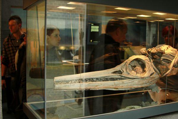 Dotternhausen Fossilienmuseum