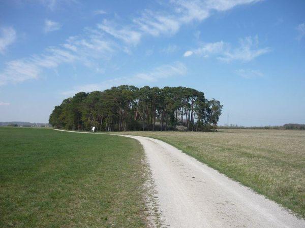 Schotterweg - Heidepfad bei Eching