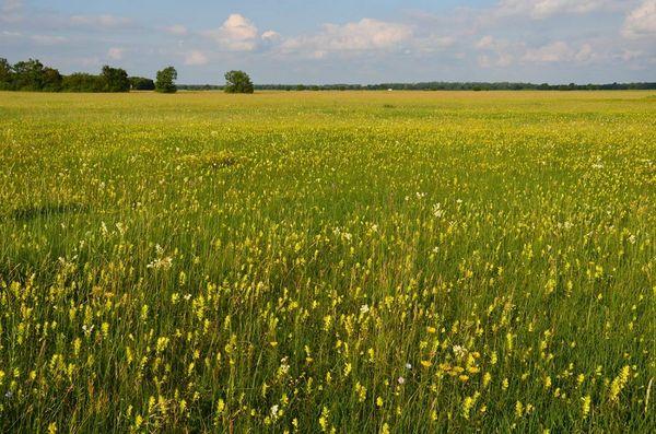 Flora der Garchinger Heide