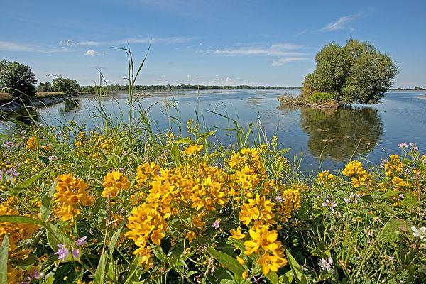 Fauna und Flora im NSG Mittlere Isarstauseen bei Moosburg