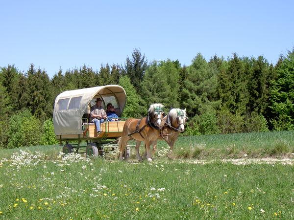 Wanderreitstation Holzmann