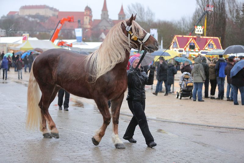 Pferdeprämierung auf dem Kalten Markt in Ellwangen