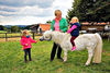 Pony auf dem Bayerwald Ferienhof Schmid