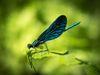 Libelle, Foto: Christoph Creutzburg, Lizenz: Seenland Oder-Spree