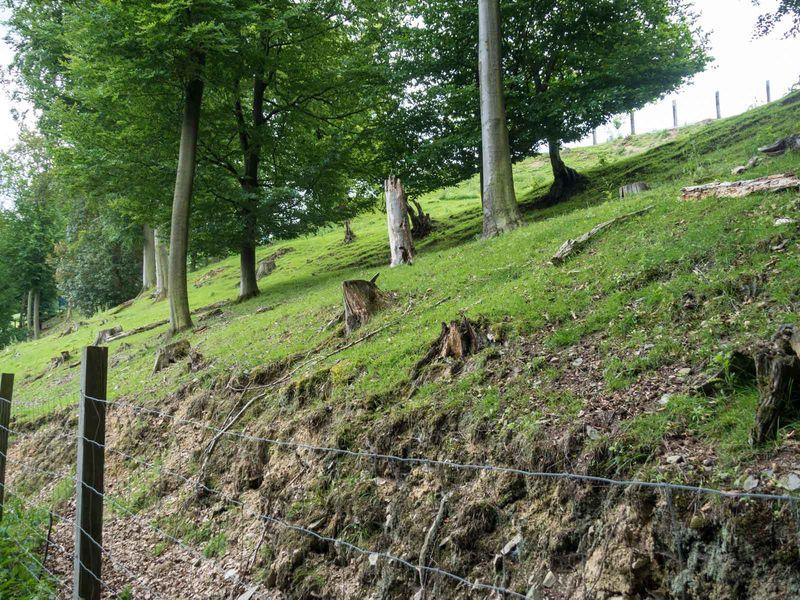 Damwildgehege auf dem Eibel Wenholthausen