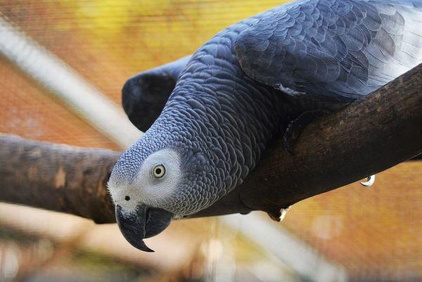 Exotische Vögel im Tierpark Nymphaea in Esslingen