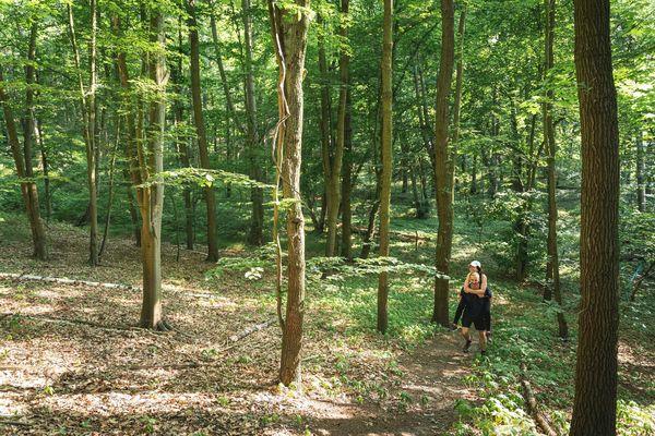 Wandern bei Falkenberg, Foto: Florian Läufer, Lizenz: Seenland Oder-Spree