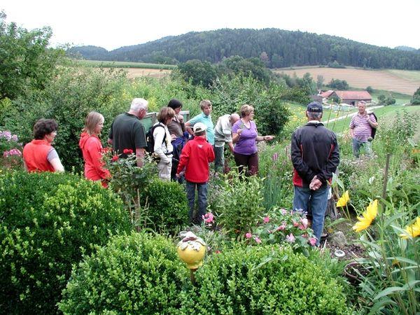 Natur pur bei einer Kräuterführung bei Falkenstein im Naturpark Oberer Bayerischer Wald