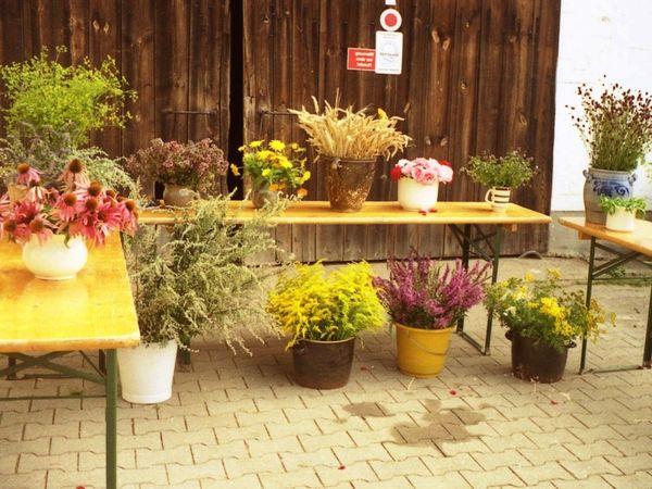 Kräuterbuschen für den Frauentag im Falkensteiner Vorwald