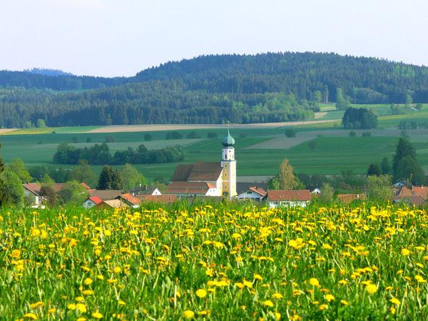 Blick über eine blühende Wiese auf die Pfarrkirche ST. VALENTIN in Arrach bei Falkenstein