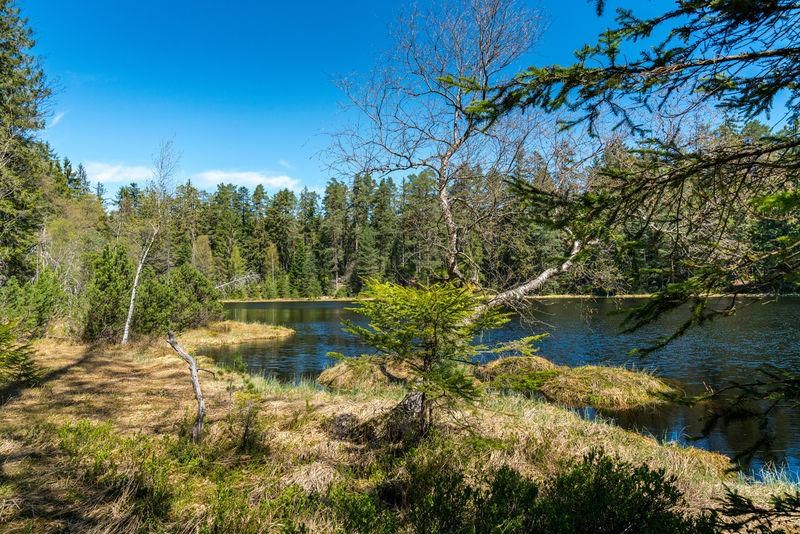 Uferlandschaft am Herrenwieser See