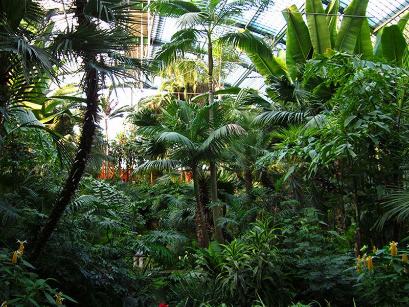 botanical garden frankfurt palmengarten region. Black Bedroom Furniture Sets. Home Design Ideas