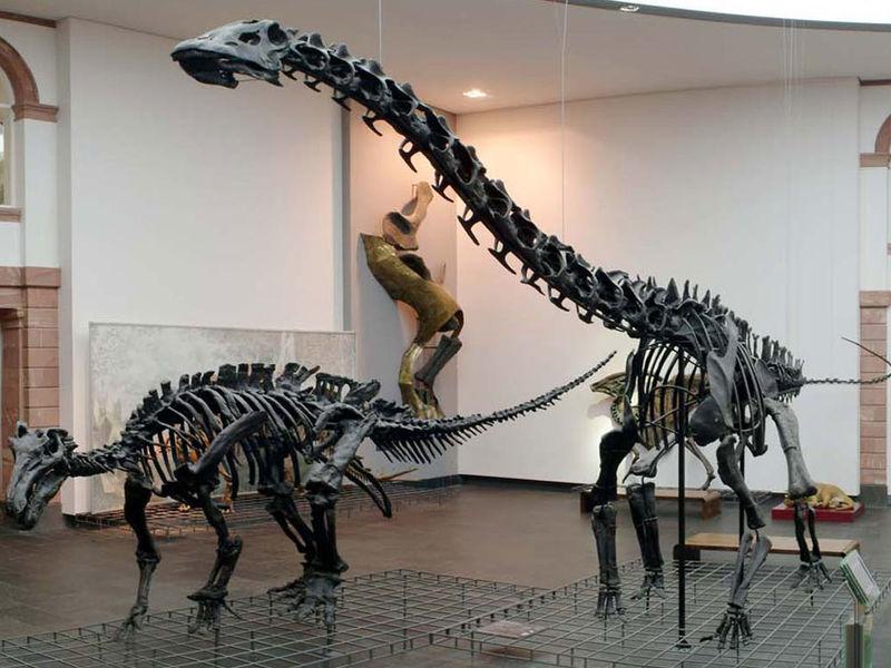 Senckenberg Natural History Museum In Frankfurt Germany